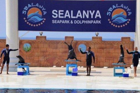Дельфинарии Sealanya в Аланье