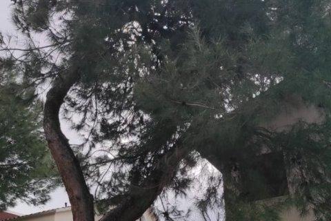 Продажа виллы в Кепезе, Анталья, Турция 5+1, 420м2, №22034 – фото 22